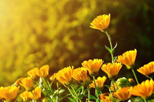 bigstock--Flowers