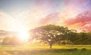 bigstock-Nature-Background-TREE