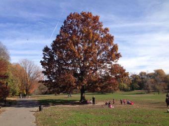tree 4a